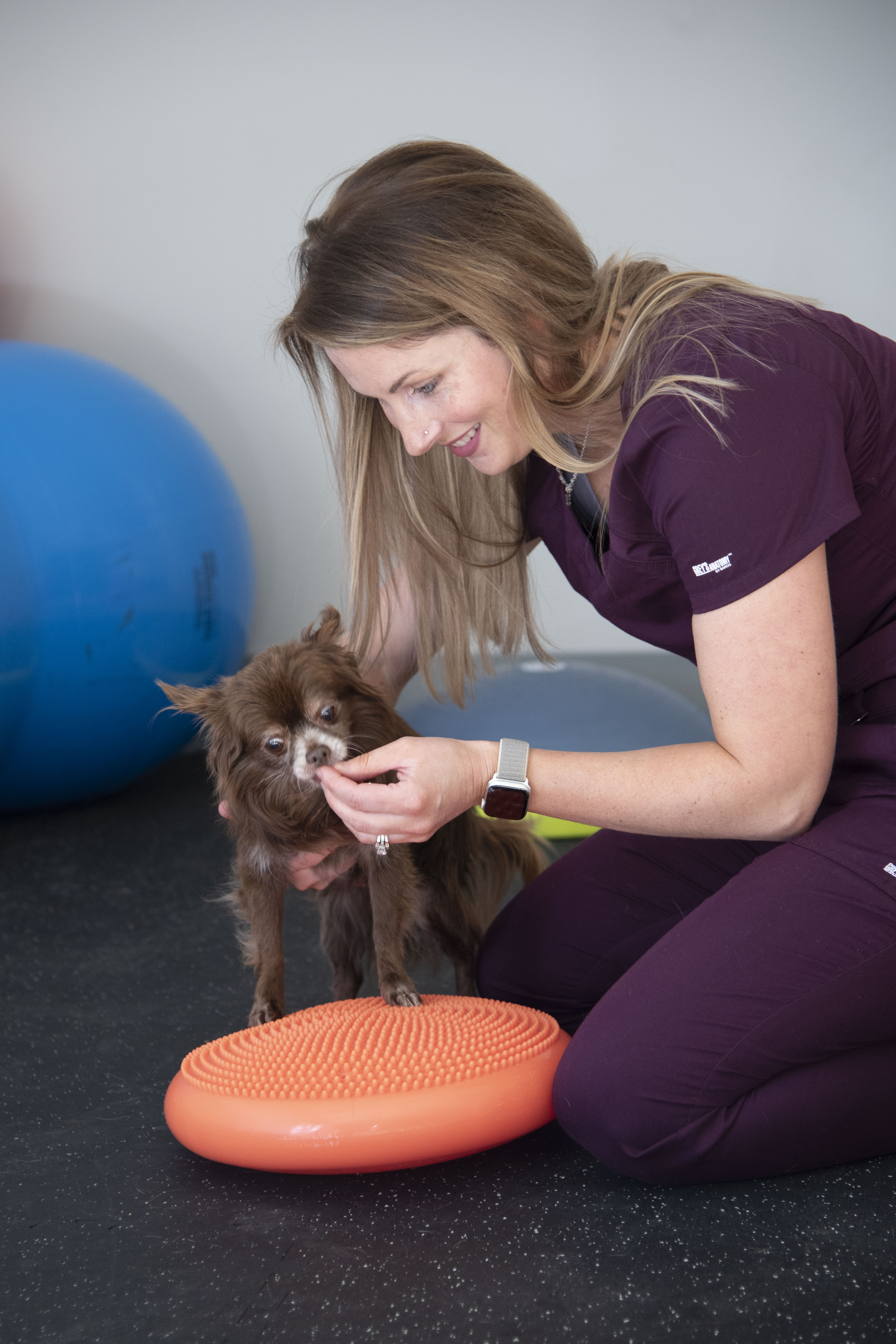 A veterinary rehab specialist works with a dog on a balance ball