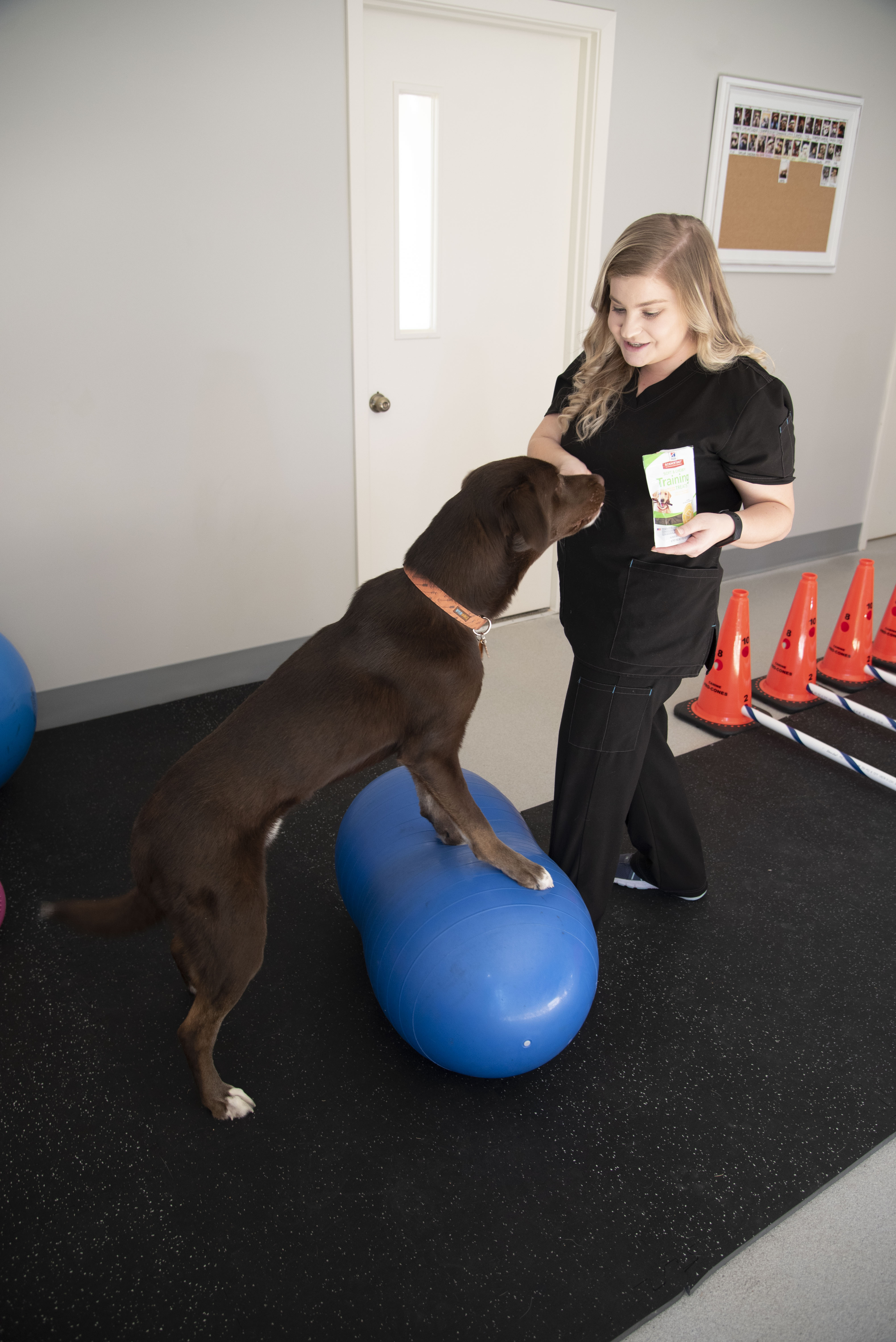 A dog balances on a stabilization ball