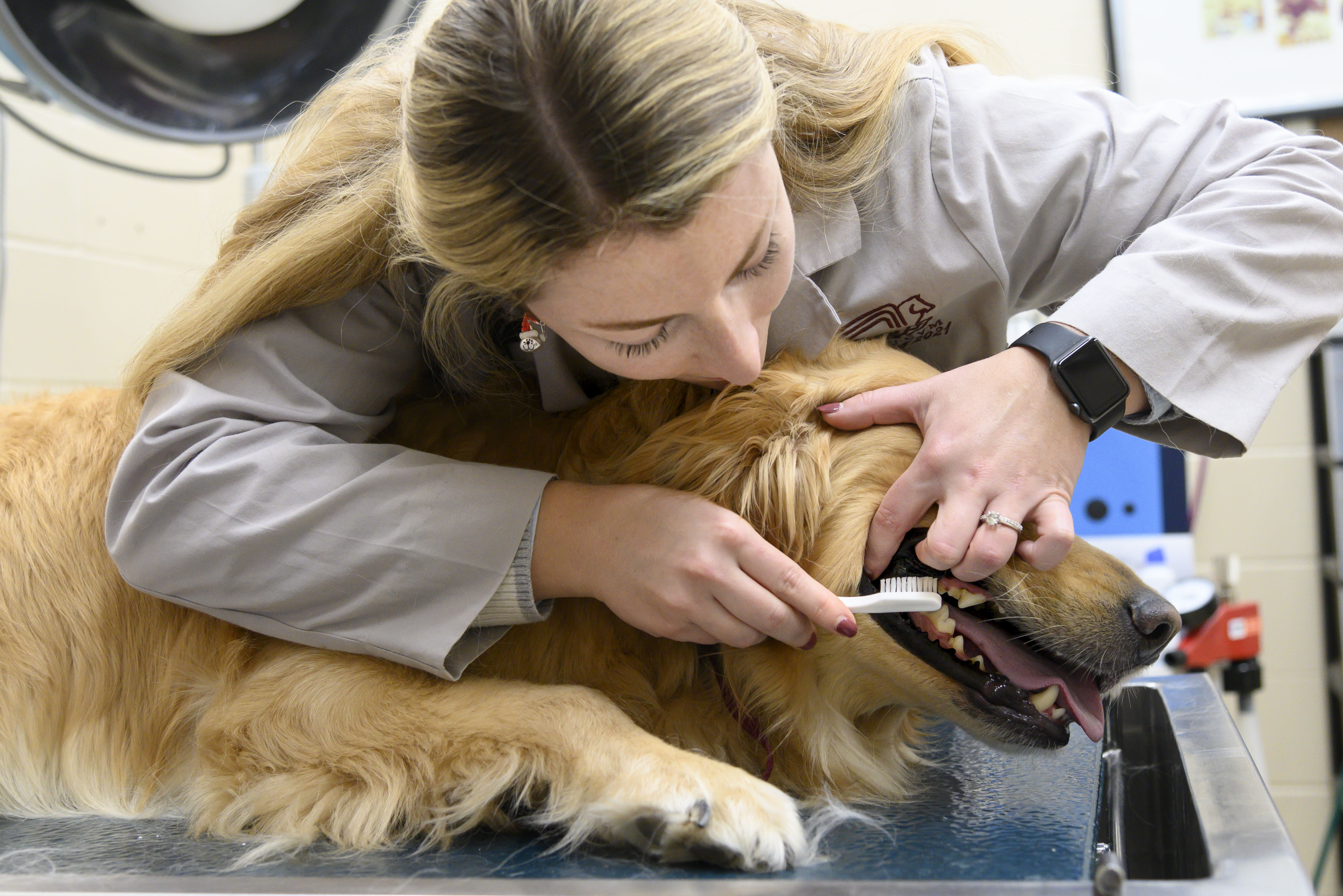 A veterinary student brushes a dog's teeth