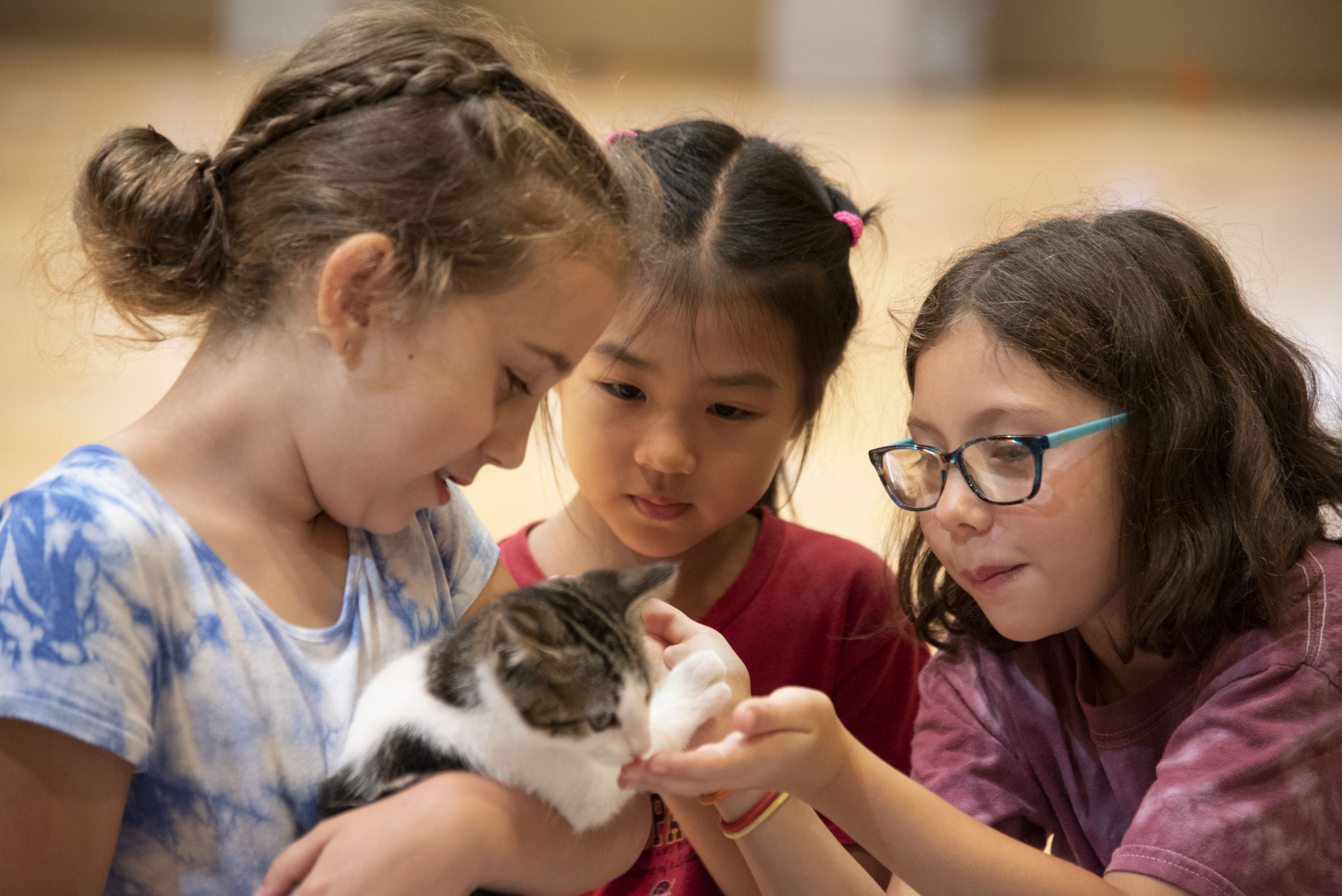 Three young students hold and observe a kitten