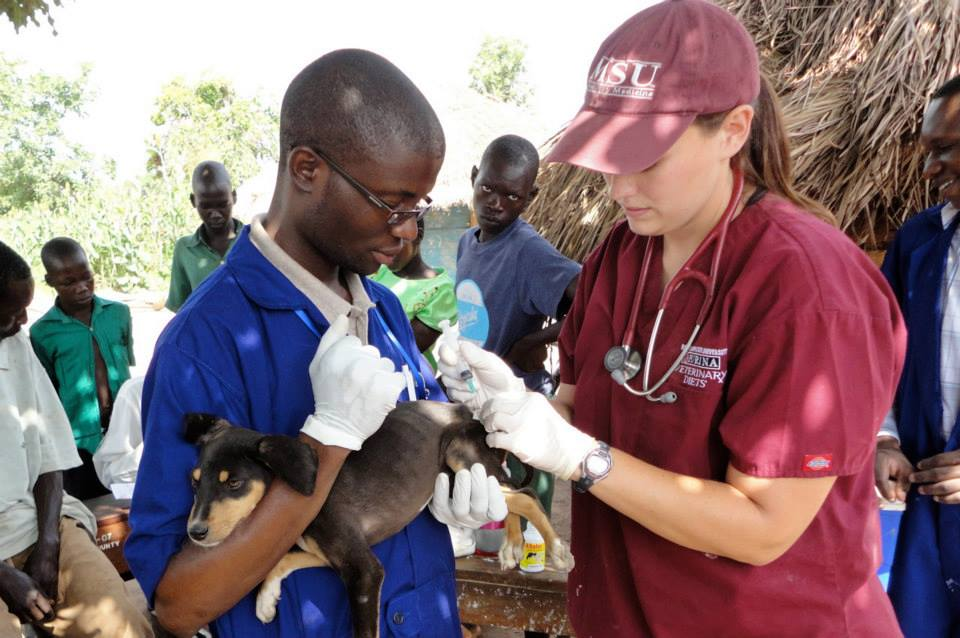 A student vaccinates a puppy in a village