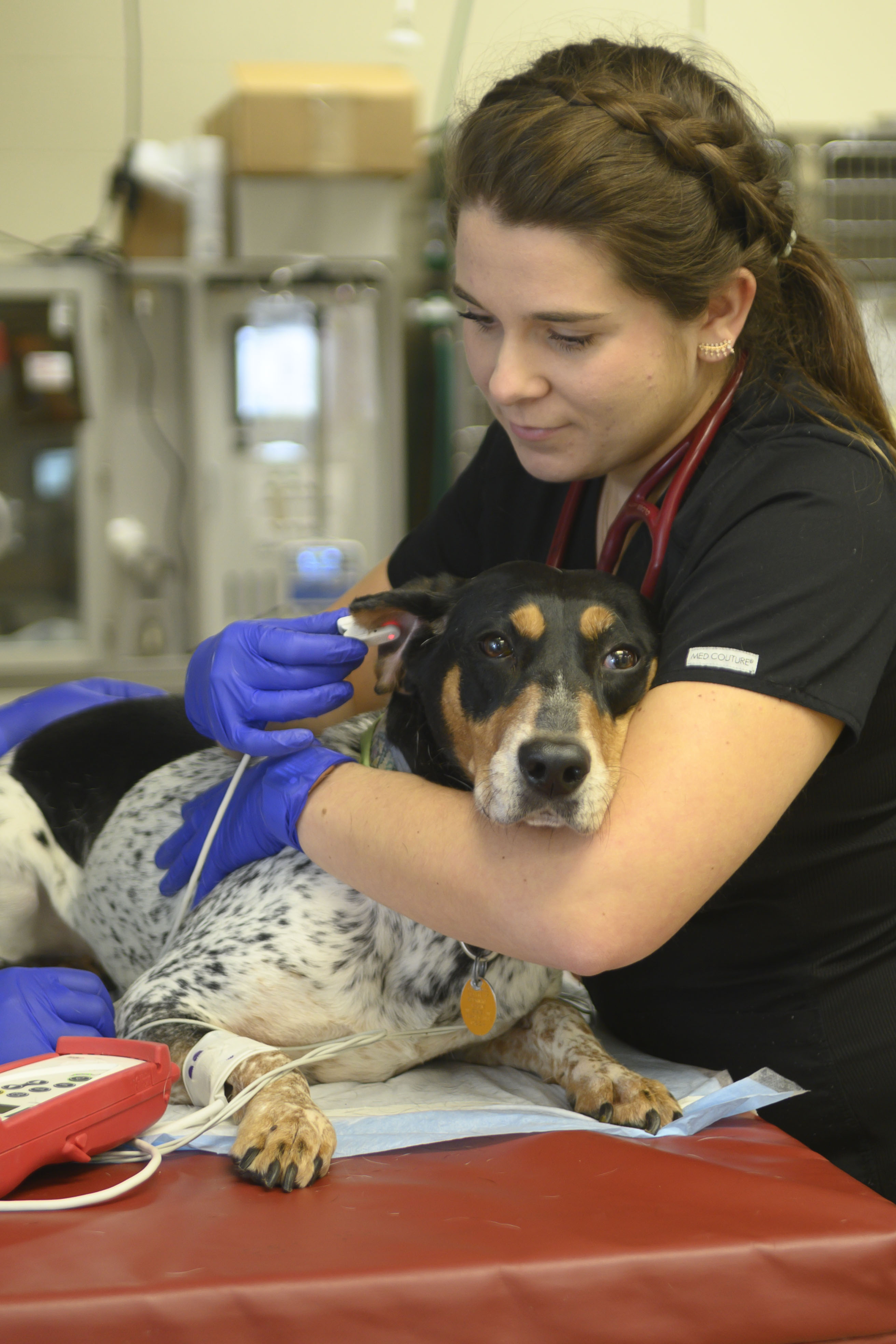 A veterinary student comforts a dog during an exam