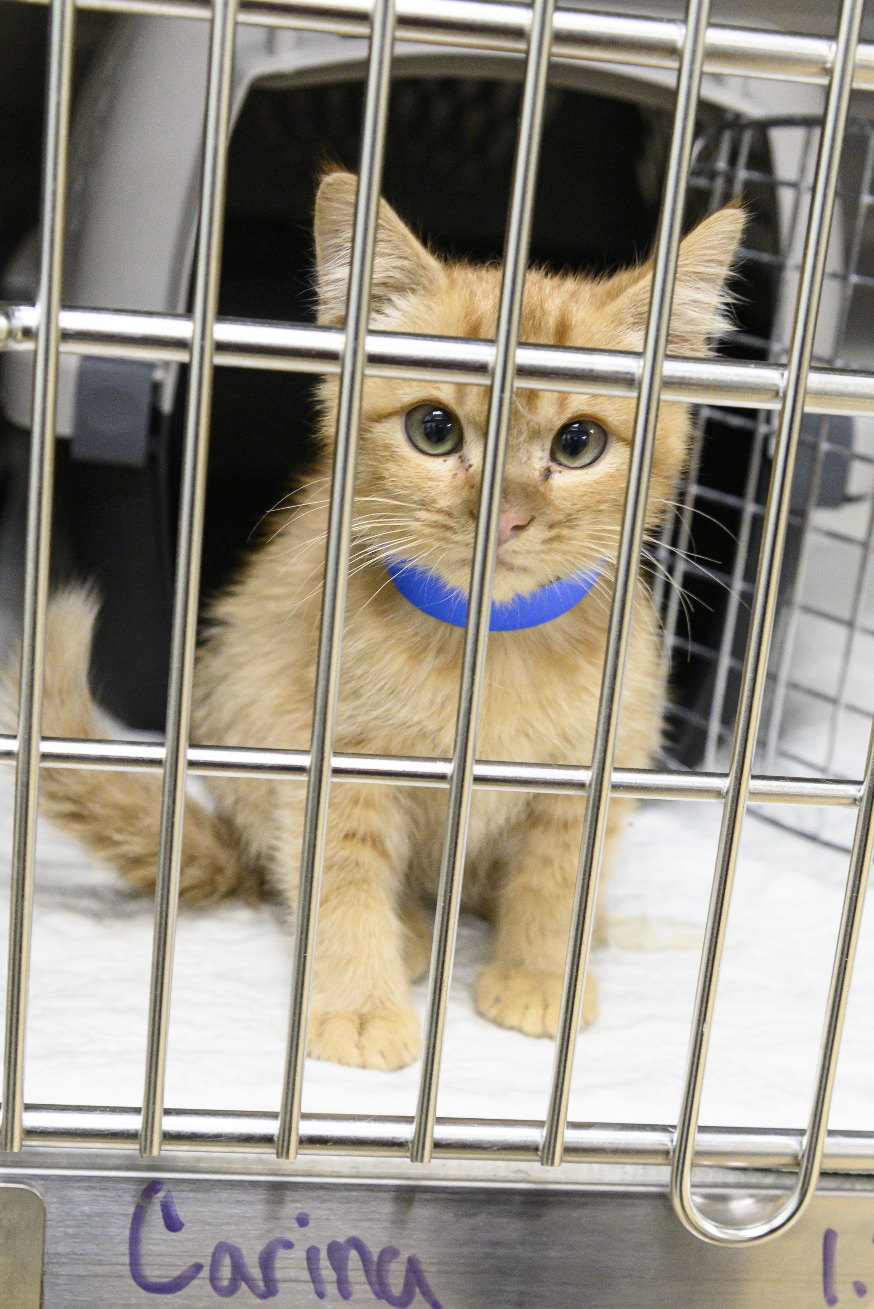 A shelter kitten in its kennel