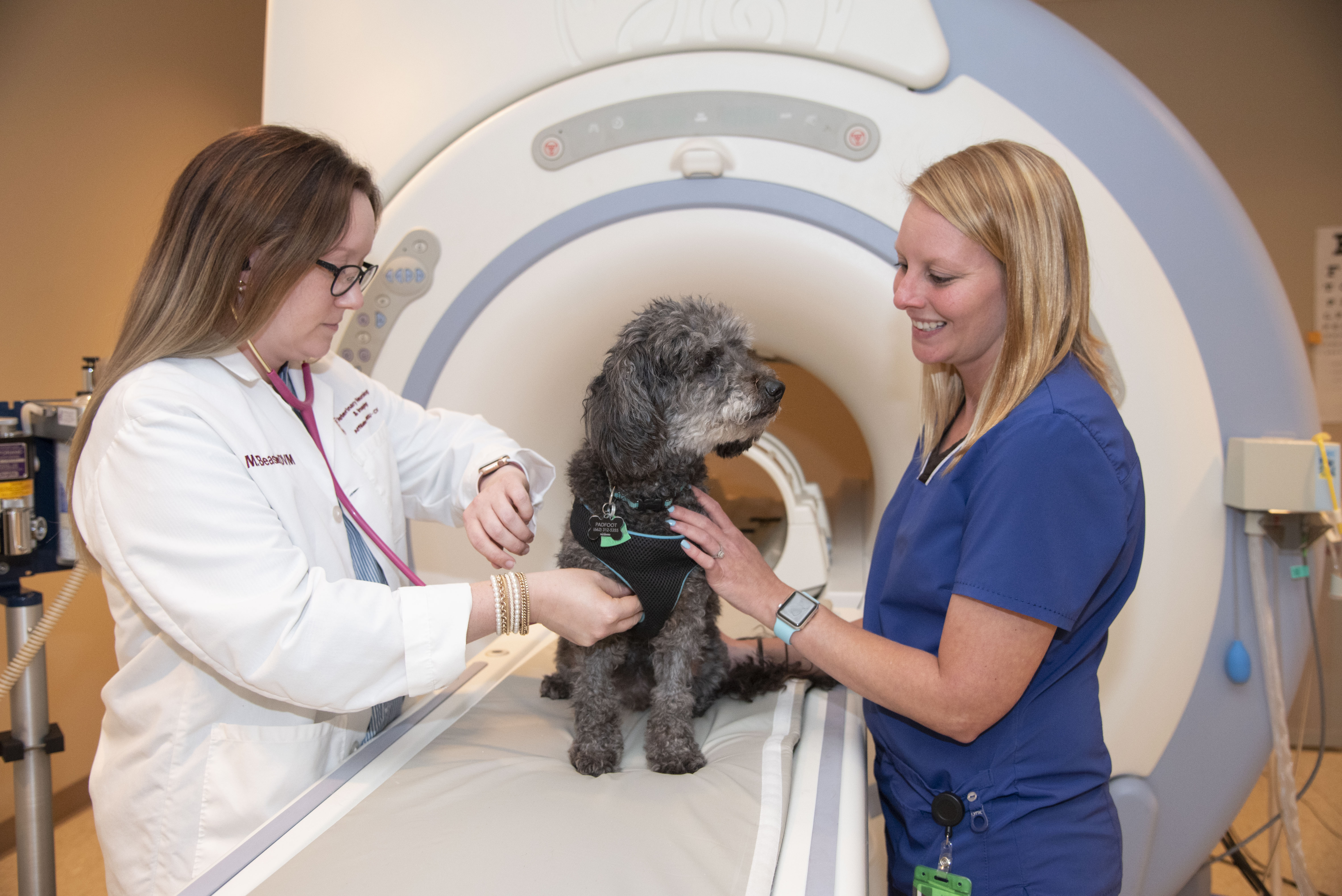 A veterinarian and a technician examine a dog after an MRI